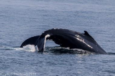 Whale_23