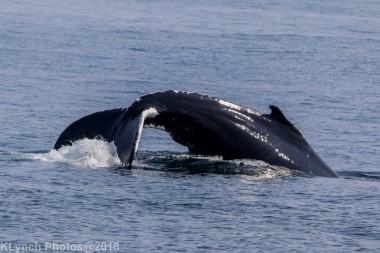 Whale_24