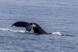 Whale_29