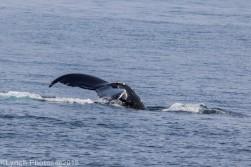 Whale_31