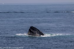 Whale_33