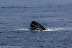 Whale_34