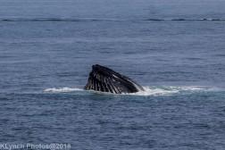 Whale_35
