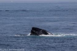 Whale_38