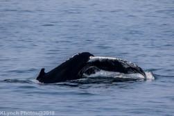 Whale_53