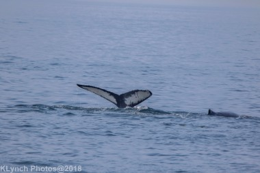 Whale_62