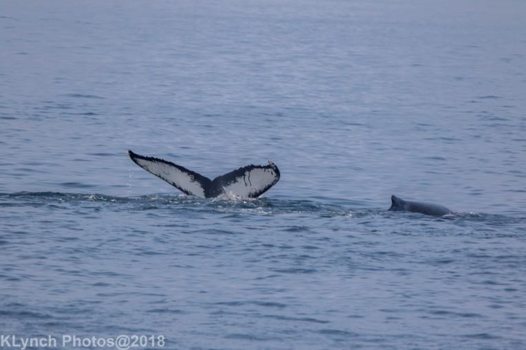 Whale_63