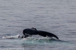 Whale_68