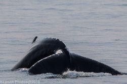 Whale_74