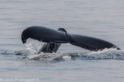 Whale_75