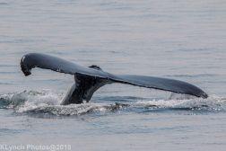Whale_76