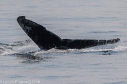 Whale_77