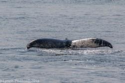 Whale_8