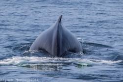 Whale_83