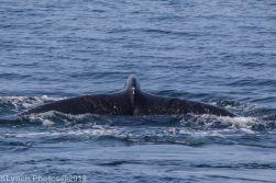 Whale_86