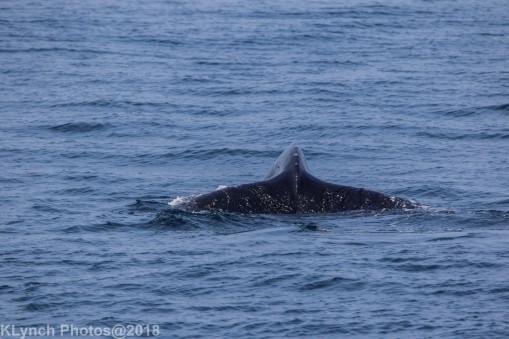 Whale_98