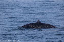 Whale_99