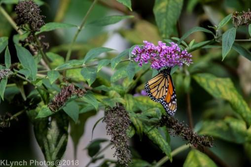 Monoarch