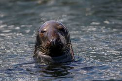 Seals_36