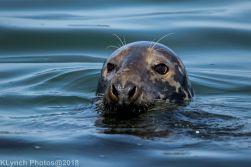Seals_55