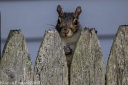 Squirrel_12