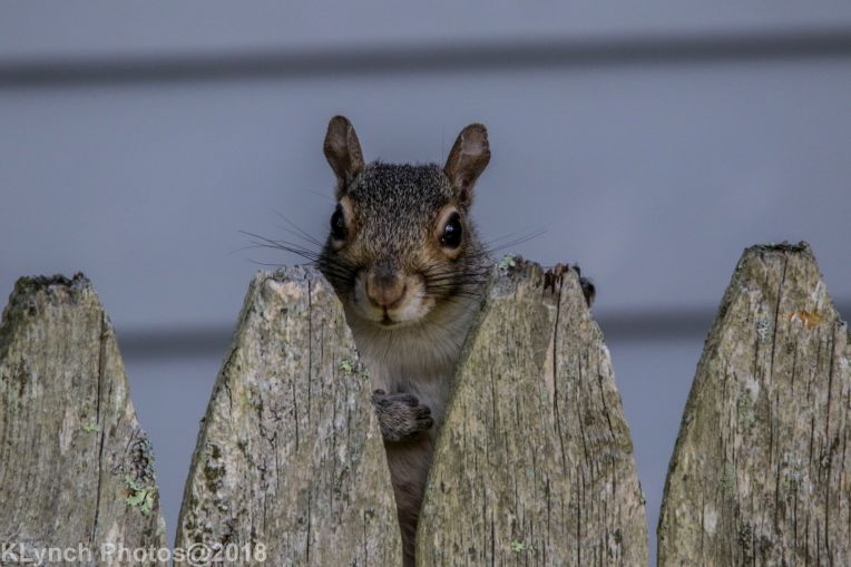 Squirrel_14