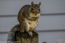 Squirrel_5