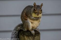 Squirrel_6