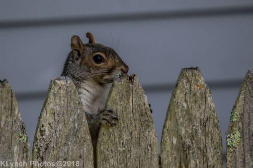 Squirrel_8