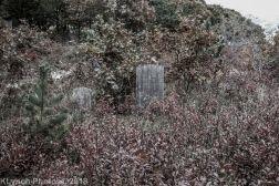 CemeteryD_BlackWhite_16