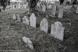 Graves_BlackWhite_17