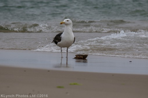 gullsbeach