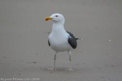 gullsbeach_11