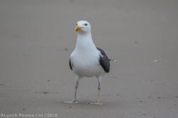 gullsbeach_12