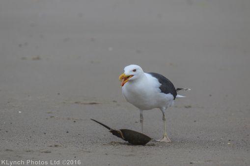 gullsbeach_16