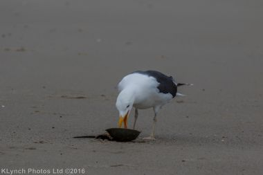 gullsbeach_17