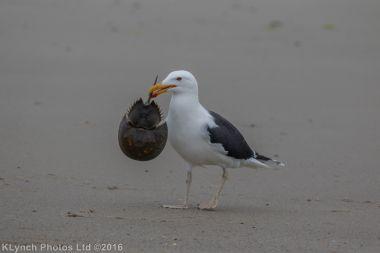 gullsbeach_18