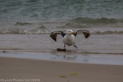 gullsbeach_2