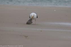 gullsbeach_20