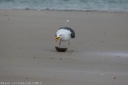 gullsbeach_22