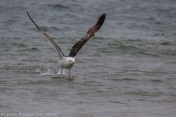 gullsbeach_9