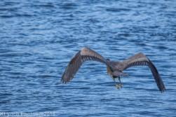 Heron_2