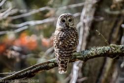 Owl_14