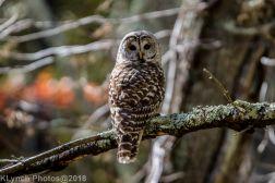 Owl_15