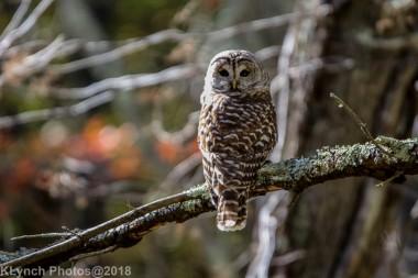 Owl_9