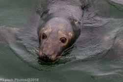 Seals_18