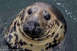 Seals_40