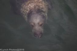 Seals_43