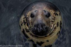 Seals_69
