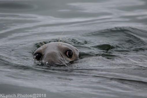 SealsB_27